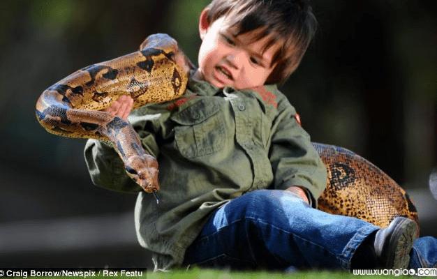"""Chú rắn đã trở thành """"bà vú"""" chăm lo trẻ nhỏ cho gia đình nhà họ Hoàng. (Ảnh minh họa)."""