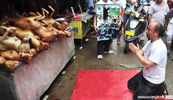 Thịt chó báo oán
