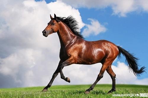 Tuổi con ngựa