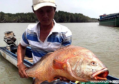 Mơ bắt được cá