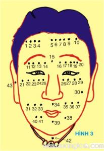 Hình 3 là khuôn mặt một phụ nữ, có 42 nốt ruồi được diễn giải như sau :