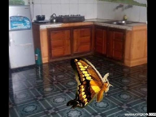 Người xưa cho rằng bướm đại diện cho một thế lực thần bí - Ảnh minh họa: Internet