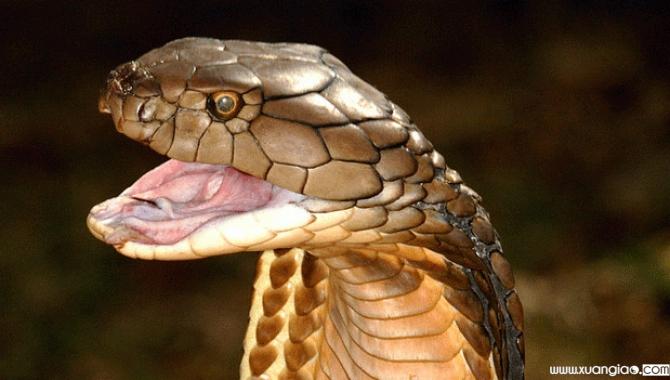 Nằm mơ thấy rắn là sinh con gái.